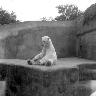 zoo i Århus store bryster dansk porno